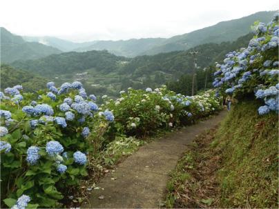 散歩部活動報告 「紫陽花のある風景 2012」_e0142619_2275687.jpg
