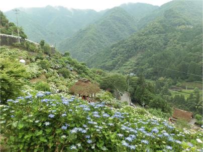 散歩部活動報告 「紫陽花のある風景 2012」_e0142619_2281970.jpg