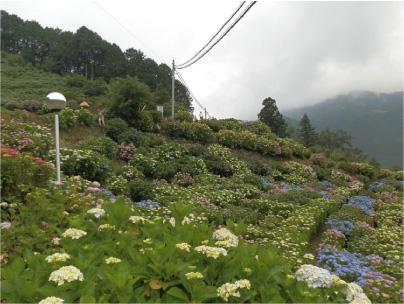 散歩部活動報告 「紫陽花のある風景 2012」_e0142619_229025.jpg