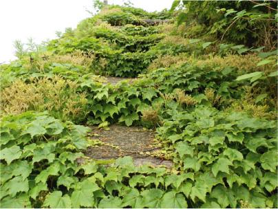 散歩部活動報告 「紫陽花のある風景 2012」_e0142619_2291071.jpg