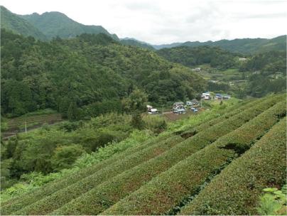 散歩部活動報告 「紫陽花のある風景 2012」_e0142619_2292149.jpg