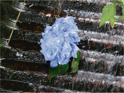 散歩部活動報告 「紫陽花のある風景 2012」_e0142619_2293998.jpg