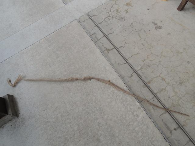 ヘビの脱殻_d0025421_16282249.jpg