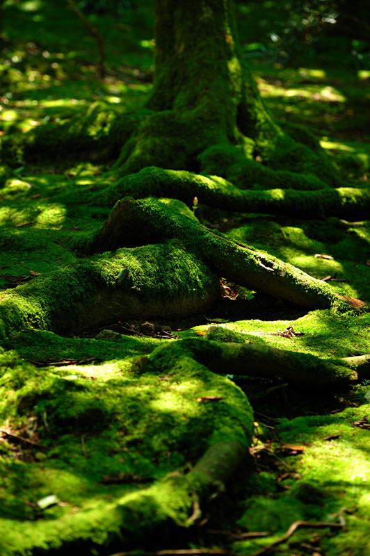 石川 『 水 と 緑 』 その2_c0220824_16511979.jpg