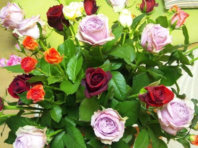 バラが咲いた♪_d0180229_1145453.jpg