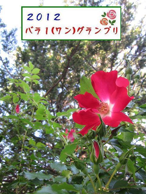 c0234938_13223699.jpg