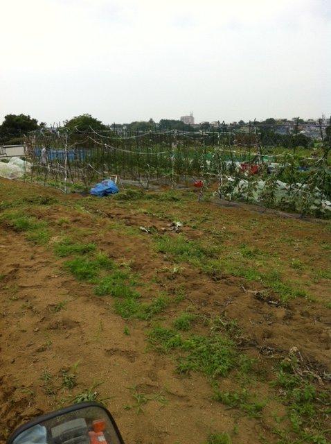 今朝は、A氏&Tさん 蚕豆とエンドウ豆の跡 土を耕します じゃがいもや玉ねぎの跡も_c0222448_1616511.jpg