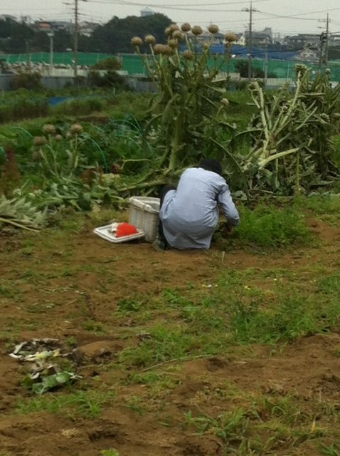 今朝は、A氏&Tさん 蚕豆とエンドウ豆の跡 土を耕します じゃがいもや玉ねぎの跡も_c0222448_16594823.jpg