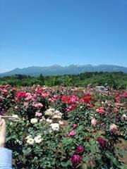 薔薇が咲いた〜〜♪薔薇が咲いた〜〜♪_b0105458_1801453.jpg