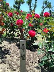 薔薇が咲いた〜〜♪薔薇が咲いた〜〜♪_b0105458_180571.jpg