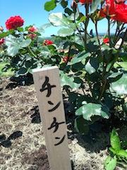 薔薇が咲いた〜〜♪薔薇が咲いた〜〜♪_b0105458_181713.jpg