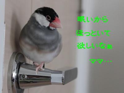 b0158061_044577.jpg