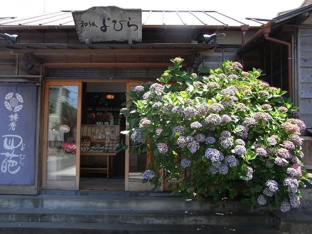 江の電に乗って 鎌倉へ 紫陽花 編_d0105967_1714950.jpg