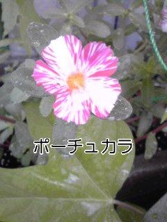 f0200871_1511151.jpg
