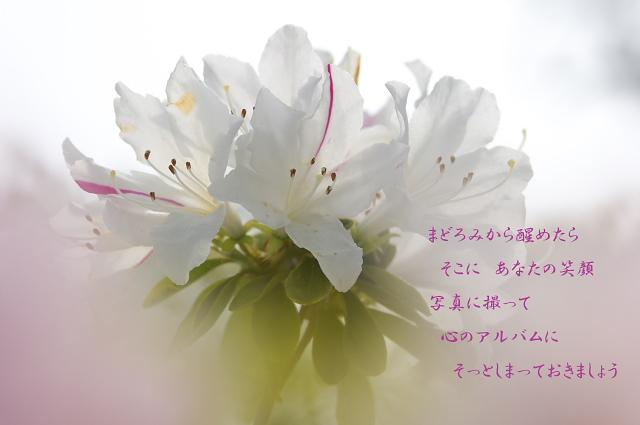 c0181187_22514741.jpg