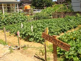 マリア農園_c0212598_17342251.jpg