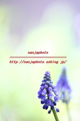 e0268999_2311219.jpg