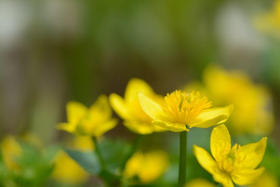 花がない_e0037126_22435212.jpg
