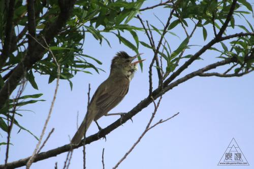 237 米子水鳥公園 ~デジスコの練習~_c0211532_12201020.jpg