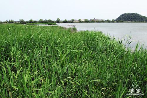 237 米子水鳥公園 ~デジスコの練習~_c0211532_12244687.jpg