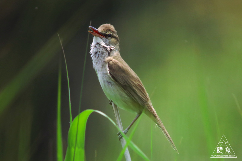 237 米子水鳥公園 ~デジスコの練習~_c0211532_12265665.jpg