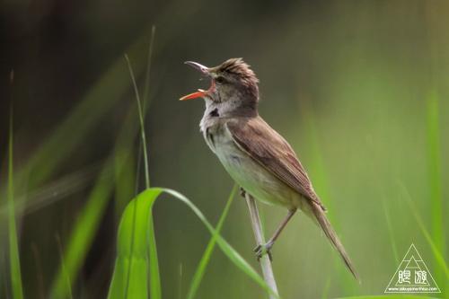237 米子水鳥公園 ~デジスコの練習~_c0211532_12275686.jpg