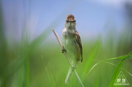 237 米子水鳥公園 ~デジスコの練習~_c0211532_1228890.jpg