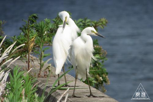 237 米子水鳥公園 ~デジスコの練習~_c0211532_12451887.jpg