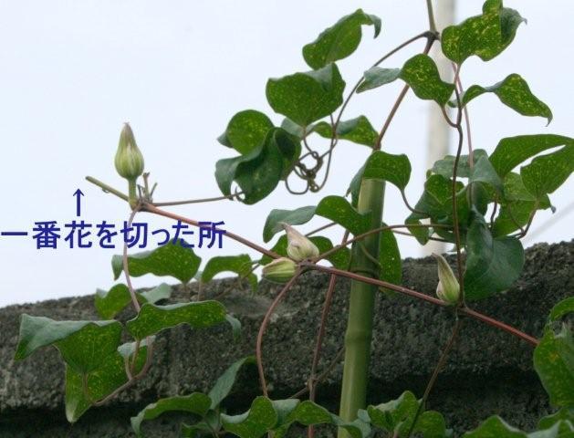 b0197433_2211619.jpg