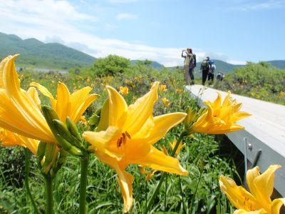 ニッコウキスゲ、咲き始めだけどやっぱりきれい~_a0096989_15363033.jpg