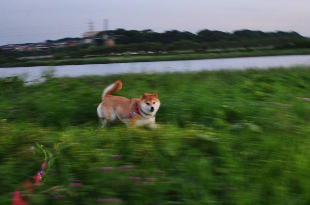 胸の奥の夕焼け_a0126590_0385974.jpg