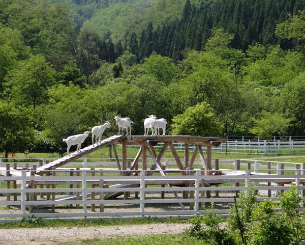 七滝のキセキレイ、日景温泉の茶々丸君など♪_a0136293_1425669.jpg