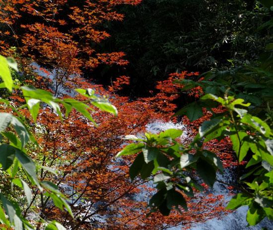 七滝のキセキレイ、日景温泉の茶々丸君など♪_a0136293_14273611.jpg