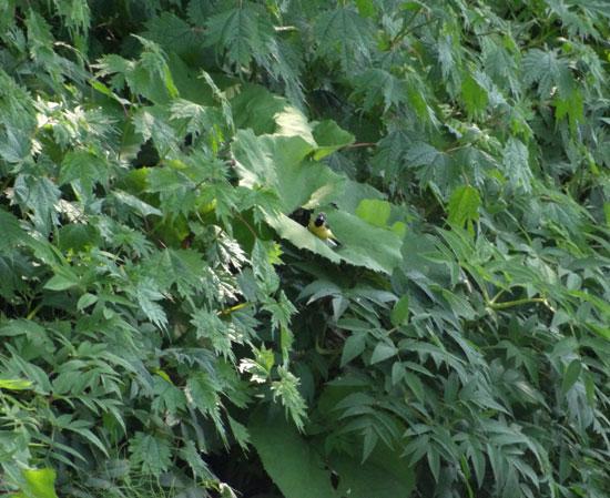 七滝のキセキレイ、日景温泉の茶々丸君など♪_a0136293_14342782.jpg