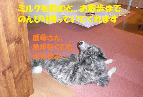 f0121712_16322368.jpg