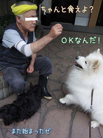真昼の決闘_c0062832_8545011.jpg