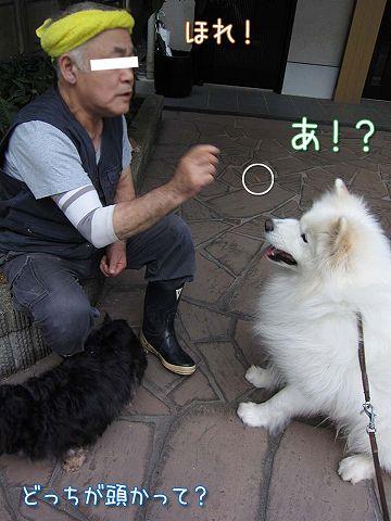 真昼の決闘_c0062832_854554.jpg