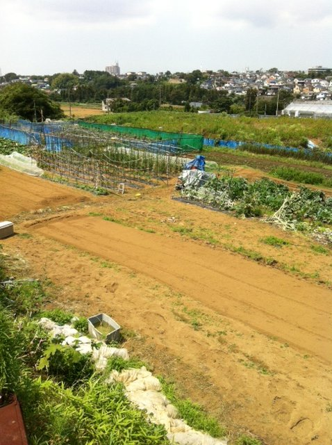 トマトの収穫害虫&捕獲器のメンテナンス_c0222448_11515370.jpg