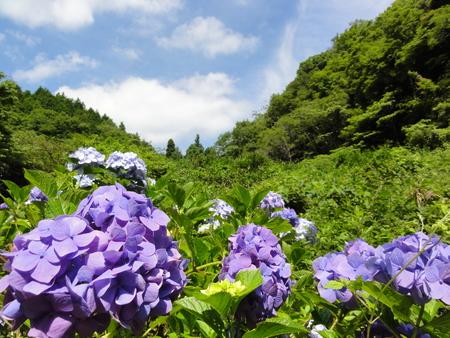 初夏の花たち in 孝子の森_c0108460_1144119.jpg