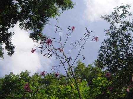 初夏の花たち in 孝子の森_c0108460_1232035.jpg