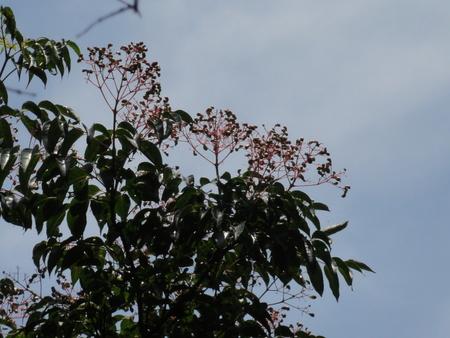 初夏の花たち in 孝子の森_c0108460_1272869.jpg