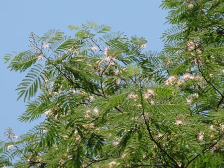 初夏の花たち in 孝子の森_c0108460_1281956.jpg
