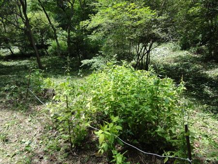 初夏の花たち in 孝子の森_c0108460_1341253.jpg