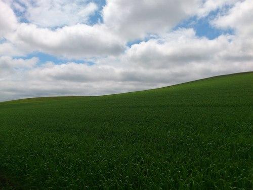 稲作から畑作へ_b0106766_1433854.jpg