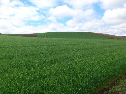 稲作から畑作へ_b0106766_1433880.jpg