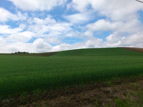 稲作から畑作へ_b0106766_1433932.jpg