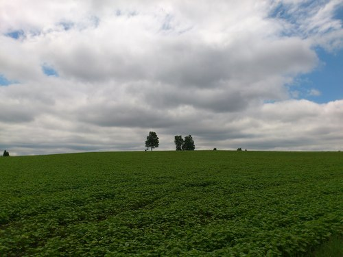 美瑛の丘の写真_b0106766_14382561.jpg