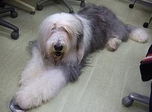 土曜のブログ タルヤスの愛犬_f0072767_19434989.jpg