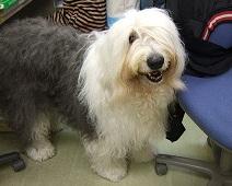 土曜のブログ タルヤスの愛犬_f0072767_19441875.jpg