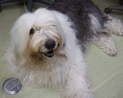 土曜のブログ タルヤスの愛犬_f0072767_19443875.jpg